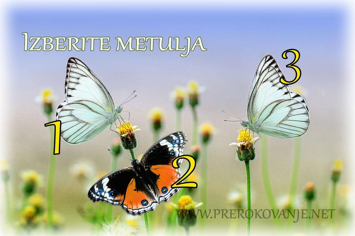 metulji-9